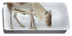 Portable Battery Charger featuring the photograph Young Rudolf by Delphimages Photo Creations