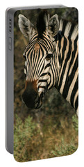 Portable Battery Charger featuring the photograph Zebra Watching Sq by Karen Zuk Rosenblatt
