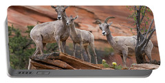 Zion Big Horn Sheep Portable Battery Charger