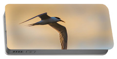 Crested Tern In The Early Morning Light Portable Battery Charger