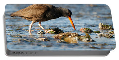Black Oystercatcher Pacific Coast Portable Battery Charger