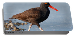 Portable Battery Charger featuring the photograph Black Oystercatcher by Sue Harper