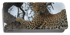 A Leopard Gazes From A Tree Portable Battery Charger