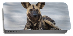African Wild Dog Resting On A Road Portable Battery Charger