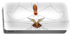 Atlas Moth1 Portable Battery Charger