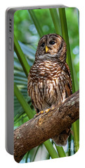 Barred Owl On Perch Portable Battery Charger