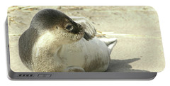 Portable Battery Charger featuring the photograph Beach Seal by Debbie Stahre