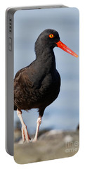 Black Oystercatcher Beachside Portable Battery Charger