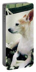 Chihuahua  Portrait  Portable Battery Charger
