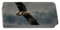 Egyptian Vulture, Sub-adult Portable Battery Charger
