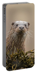 Eurasian Otter (lutra Lutra) Portrait, Scotland, Uk Portable Battery Charger