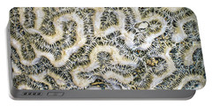 Fossilized Brain Coral Portable Battery Charger