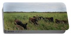 Galloway Cows On Texel North Holland Portable Battery Charger