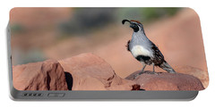 Gambels Quail One Portable Battery Charger