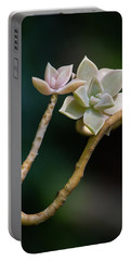 Portable Battery Charger featuring the photograph Ghost Plant Succulent by Dale Kincaid