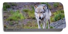 Grey Wolf In Denali National Park, Alaska Portable Battery Charger