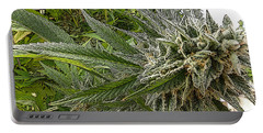 Portable Battery Charger featuring the photograph Larry Og #3 by Ahma's Garden