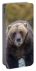 Lazy C Angry Bear  Portable Battery Charger