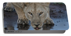Lioness Drinking Portable Battery Charger