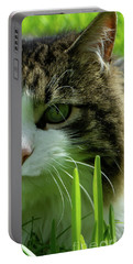 Portable Battery Charger featuring the photograph Maine Coon Cat Photo A111018 by Mas Art Studio