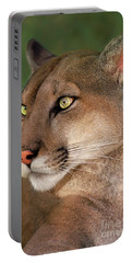 Mountain Lion Portrait Wildlife Rescue Portable Battery Charger