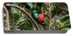 Northern Double-collared Sunbird Portable Battery Charger