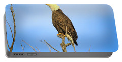 Portable Battery Charger featuring the photograph Perched Bald Eagle by Dan Sproul