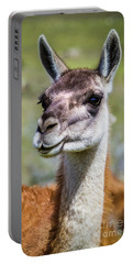 Portrait Of A Guanaco, Patagonia Portable Battery Charger