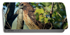 Red-tailed Hawk Looking Down From Tree Portable Battery Charger
