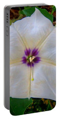 Portable Battery Charger featuring the photograph Sacred Datura - Full Bloom by Judy Kennedy