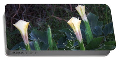 Portable Battery Charger featuring the photograph Sacred Datura Trio - Partial Blooms by Judy Kennedy