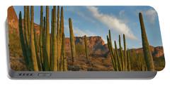 Senita Cactus, Ajo Mountains, Organ Portable Battery Charger