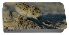 Snowy Plover On The Hunt Portable Battery Charger
