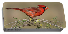 South Texas Cardinal Portable Battery Charger
