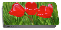 Spring Trio Portable Battery Charger