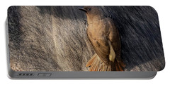 Sub-adult Yellow-billed Oxpecker On Cape Buffalo Portable Battery Charger