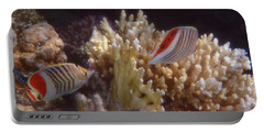 The Crown Butterflyfish Of The Red Sea Portable Battery Charger