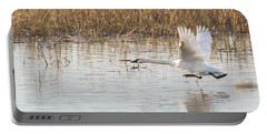Trumpeter Swan Cygnus Buccinator Taking Portable Battery Charger