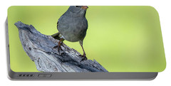 White Crowned Sparrow 1 Portable Battery Charger