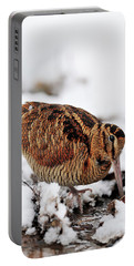 Woodcock Probing For Prey In Marsh, Berwickshire, Scotland Portable Battery Charger
