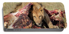 Young Lion On Cape Buffalo Kill Portable Battery Charger