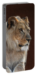 Portable Battery Charger featuring the photograph Young Male Lion Portrait by Debi Dalio