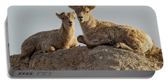 Young Mountain Sheep In Badlands National Park Portable Battery Charger