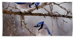 Blue Jay Pictures 61 Beach Towel