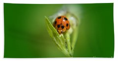 Ladybug Beach Towel by Michelle Meenawong