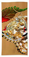 Painted Lady Butterfly Beach Sheet
