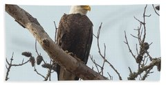Resting Bald Eagle Beach Sheet
