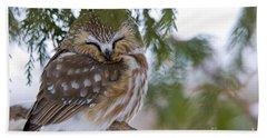 Saw-whet Owl Pictures 48 Beach Towel