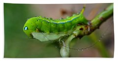 Beach Towel featuring the photograph  Wet Caterpillar by Michelle Meenawong