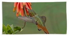 Allens Hummingbird Feeding Beach Towel